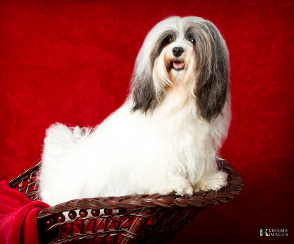 Hapi at 4 years old!