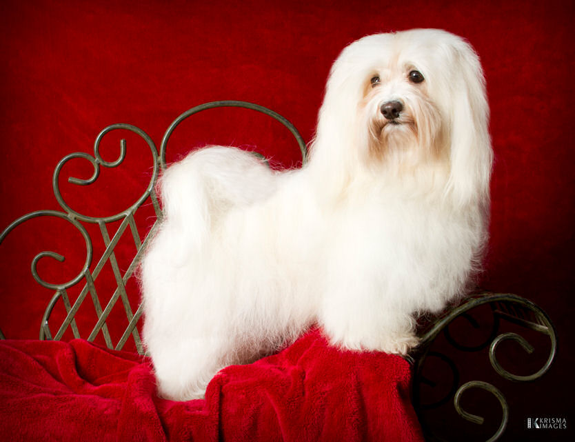 I'm the first 2nd Generation GCH!!!