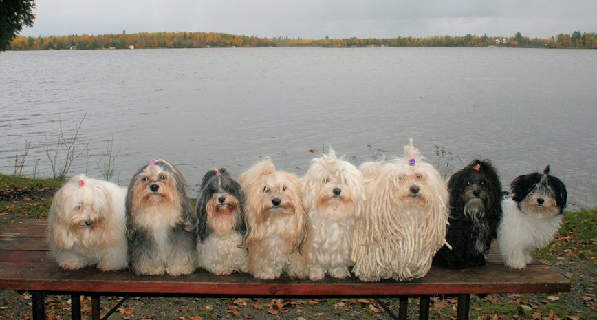 The whole gang!