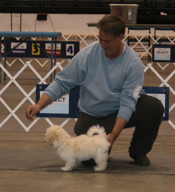 My first puppy show at 4 months