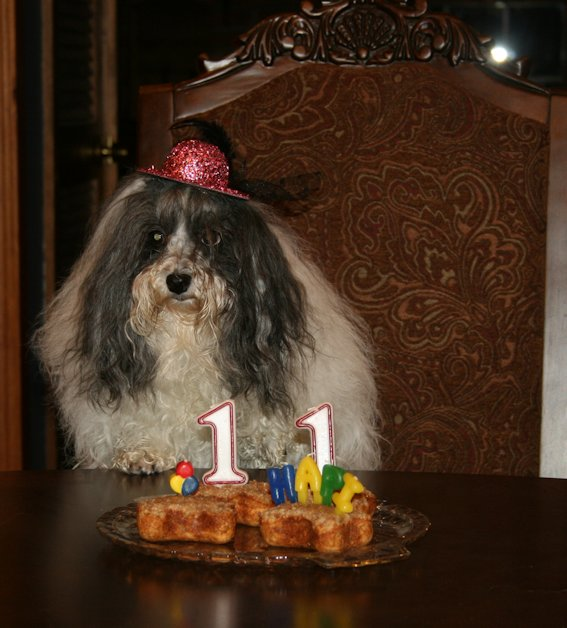 I'm 11 years old today!!