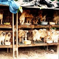 Breeders and Puppy Mills