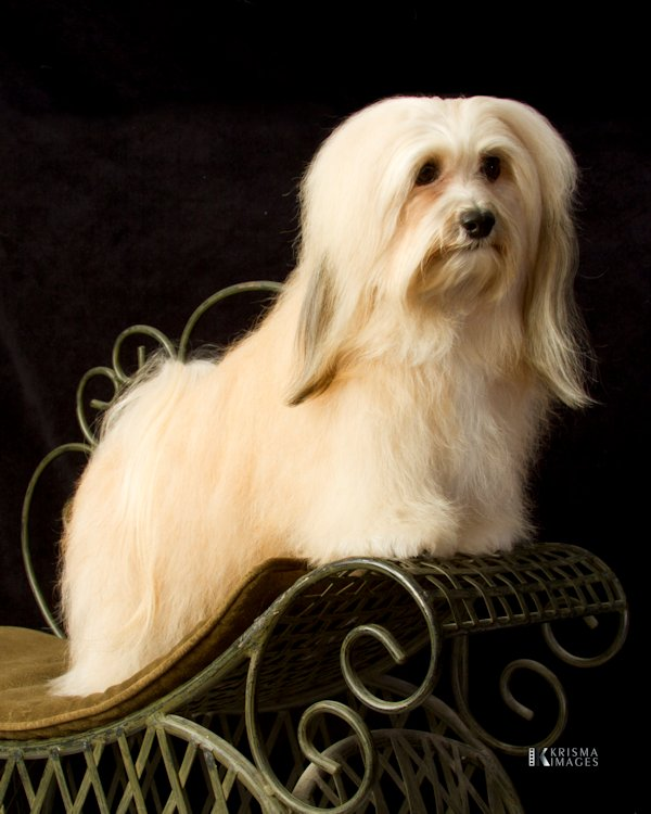 Rozy at 3 years old!