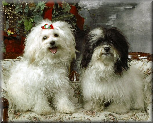 Roy 2 year and Bee 15 months